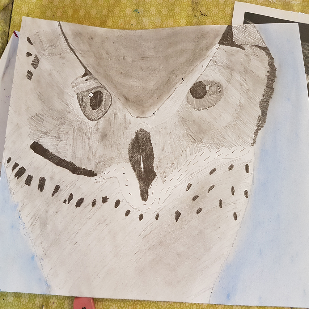 owl, pencil, drawing, fall